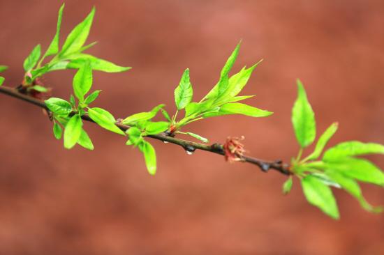 满城杨柳树,春来发几枝